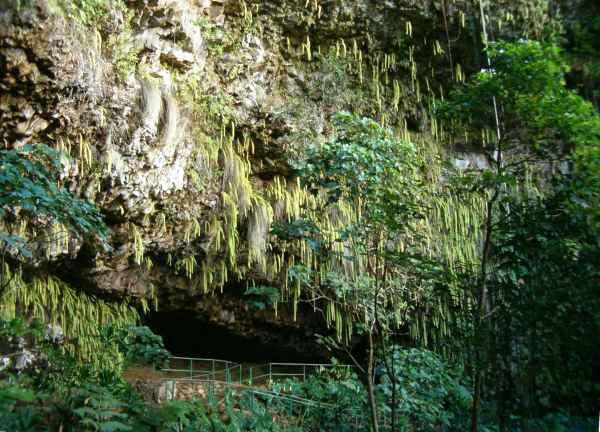 A view of the outside of the Fern Grotto, a shallow cave in a cliff face covered in green ferns and dripping water