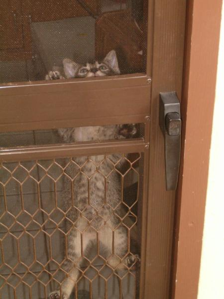 Kitten climbing inside the screen, seen from outside
