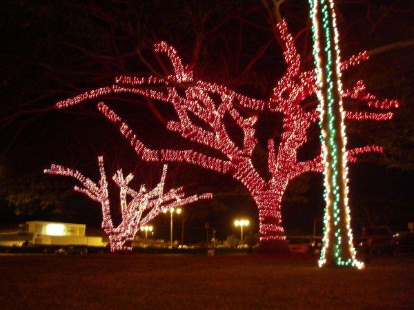 LightedTrees