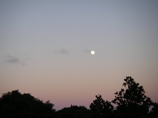 A full moon still looking tiny in a pink sky turning blue, above silhouetted trees