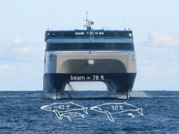 Kauai Protestors Block Ferry | A Kauai Blog