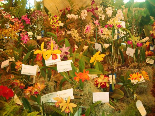 Dozens of different flowering orchids