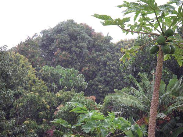 The dark and lush vegetation in the neighbor