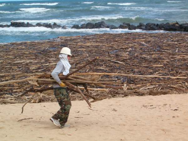 Robin carrying driftwood away from the beach