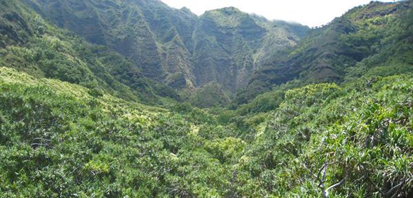 WaiahuakuaValley